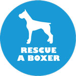 Amherst Helps Rescue a Boxer