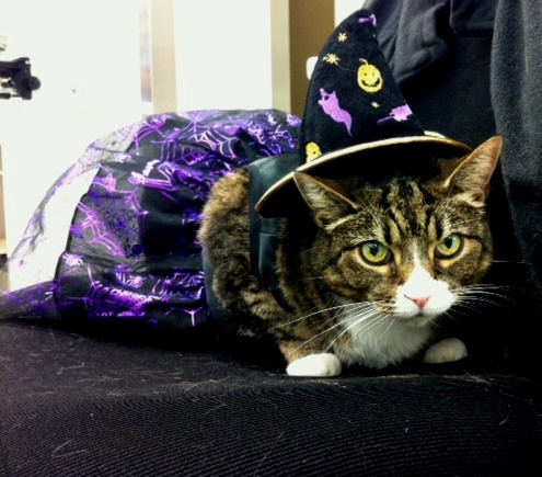 Amherst Veterinary Hospital prepares for Halloween