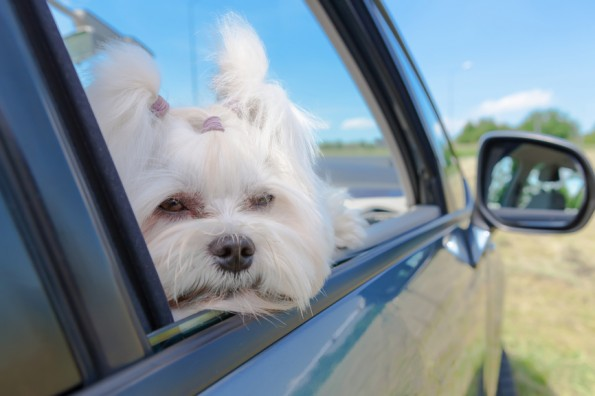 Pet Therapy: Traveling with pets made easy