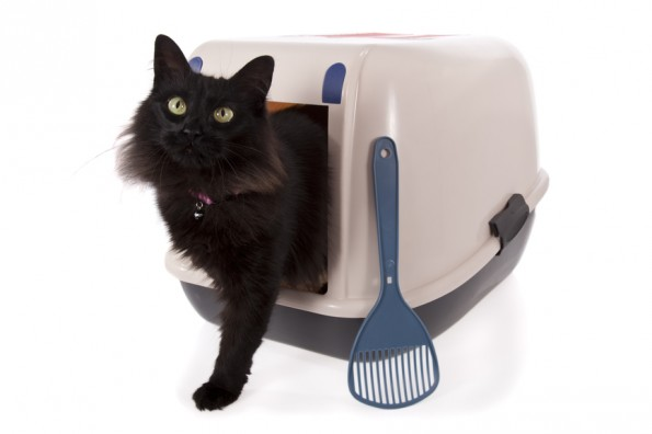 Thinking Inside the Box – Kitty Litter Solutions