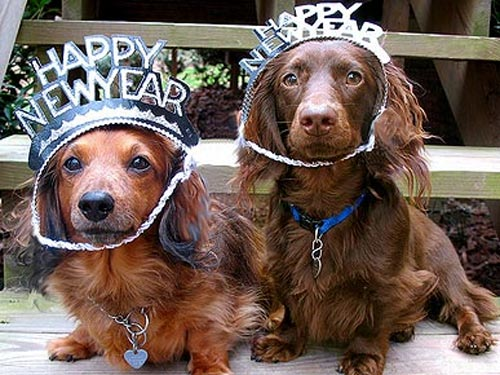 New Year Resolutions for Your Pets