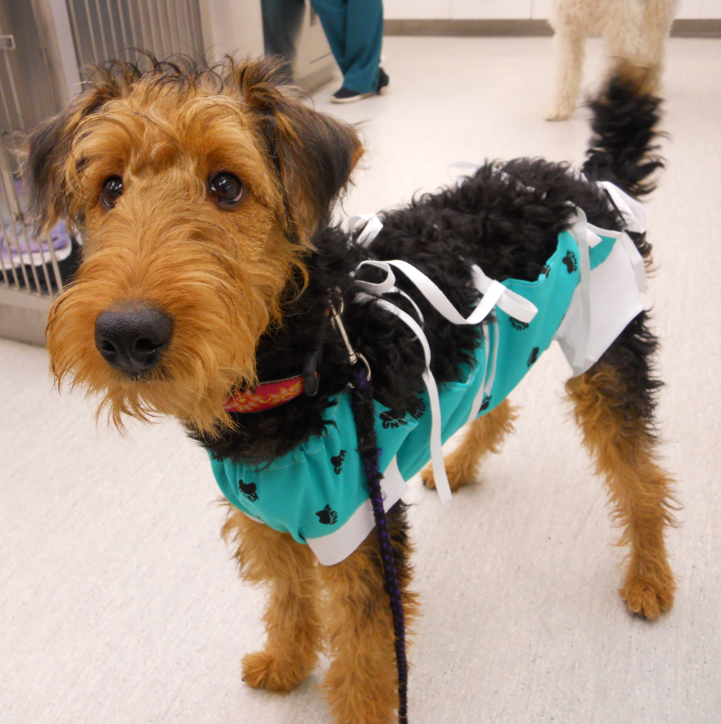 Puppy of the Week: Henley