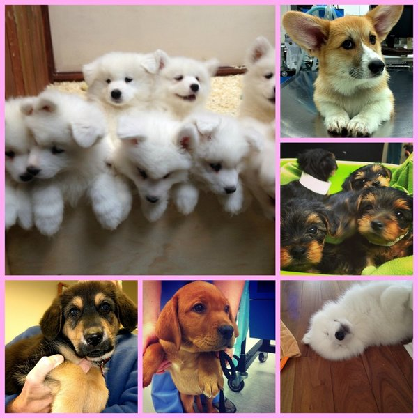 Our Vancouver Veterinary Hospital celebrates National Puppy Day