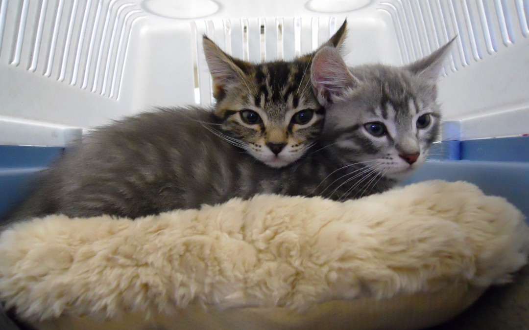 Pets of the Week: Asher and Wilbur
