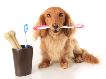 February is dental month at Amherst Veterinary Hospital