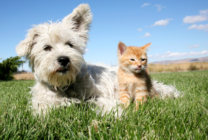 Our Vancouver Veterinary Hospital Discusses Heatstroke