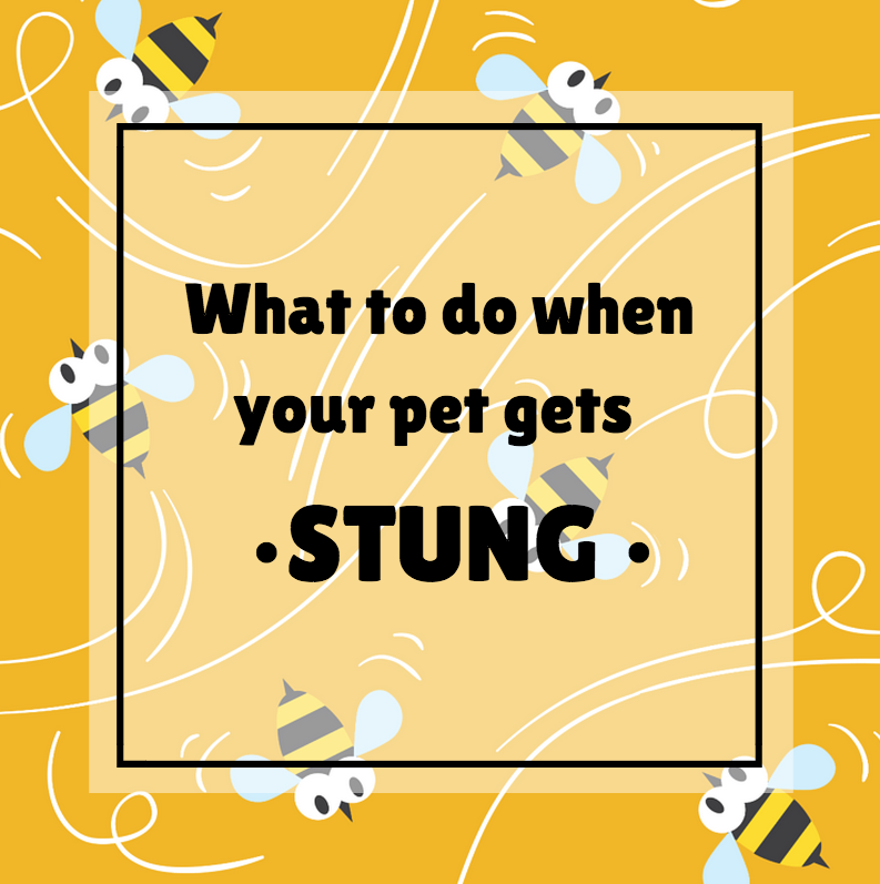 Our Vancouver Veterinary Hospital Discusses Bee Stings
