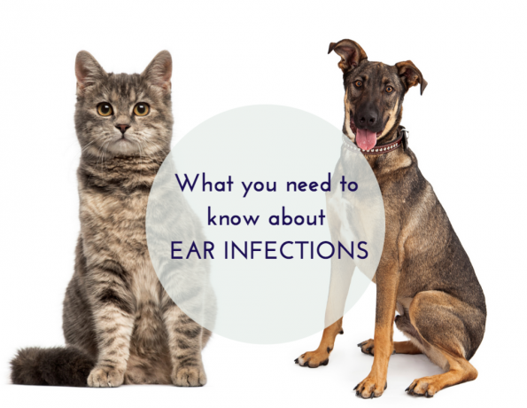 Seasonal Allergies – Dr. Loretta Yuen Discusses Ear Infections