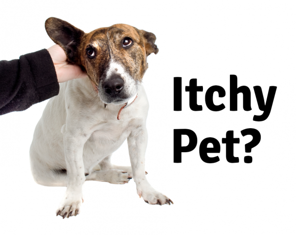 Our Vancouver Veterinary Hospital Discusses Itchy Pets