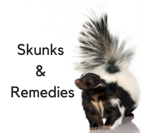 So Your Pet Was Skunked!