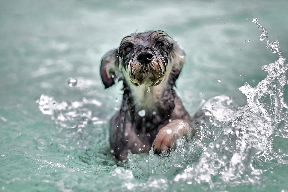 Our Veterinary Hospital Discusses Swimming Pets