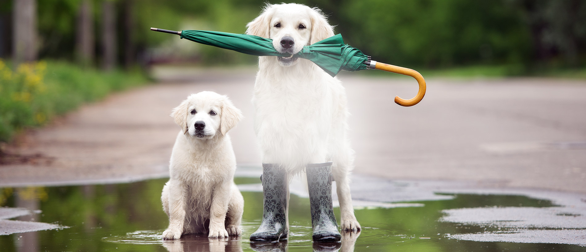 Welcome Fall - Dogs + umbrella banner