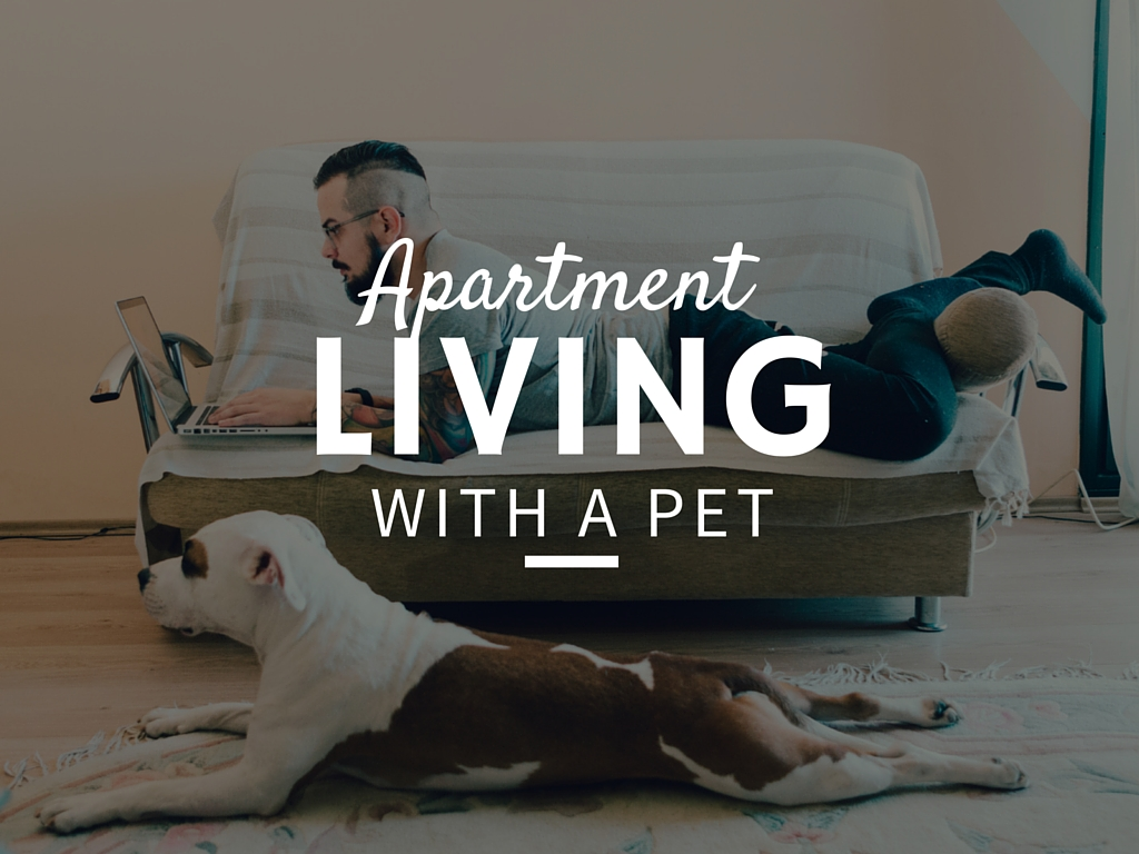 Amherst Veterinary Hospital Discusses Apartment Dogs