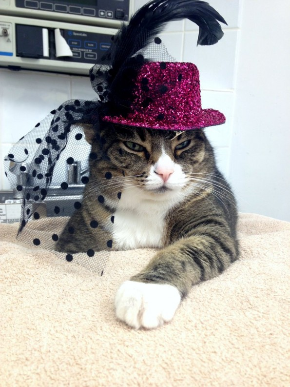 Amherst Veterinary Hospital Gears Up for Halloween
