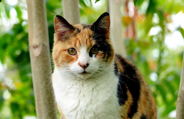 Does the color of a cats coat predict their temperament?