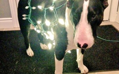 Here's to a Safe and Happy holiday Season from Amherst Vet Hospital!