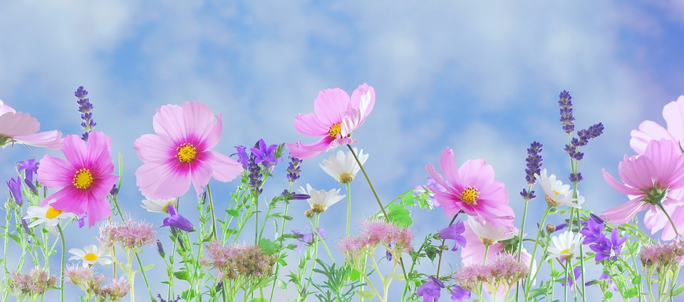 Beware the Blooms