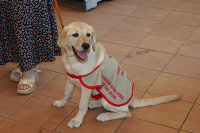 April 27th – National Guide Dog Day