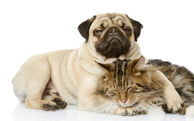 Amherst Vet Hospital Discusses Covid-19 coronavirus and our pets